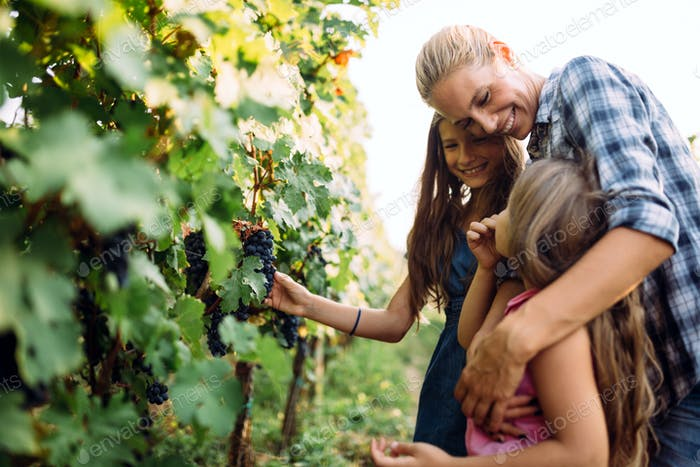 Winemaker cute young family together in vineyard
