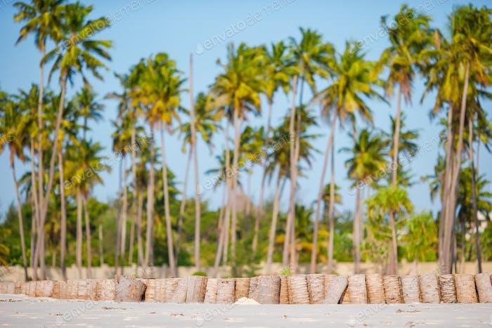 Palm trees on white sandy beach