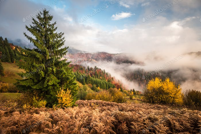 Beautiful majestic landscape with conifer trees on mountain