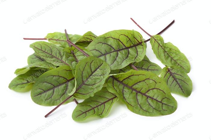 Rot geäderte Sauerampfer Blätter