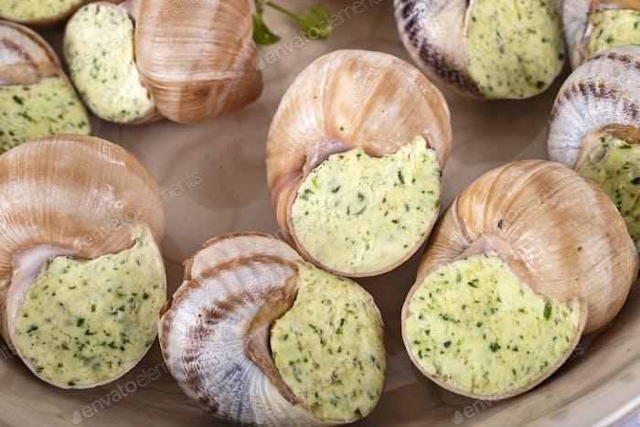 stuffed snails in studio