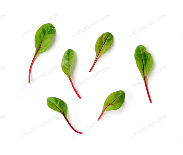 Set of green chard leaves or mangold isolated
