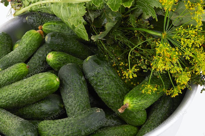 Cucumbers in an aluminum bowl, preparation for preservation