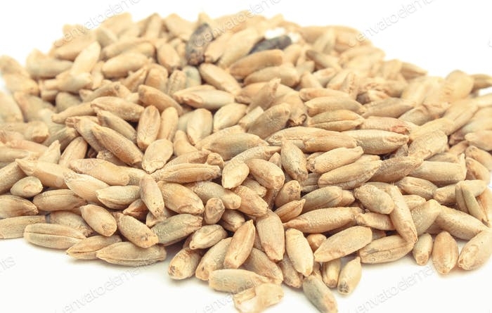 Rye or wheat grains on white background