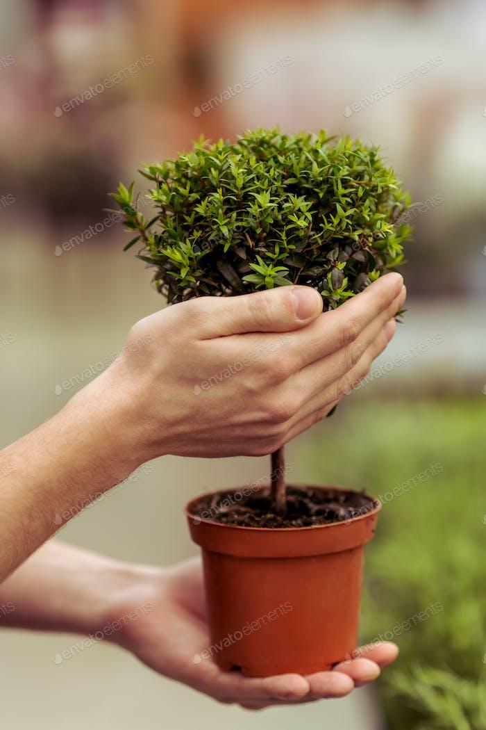 Hände und Pflanzen