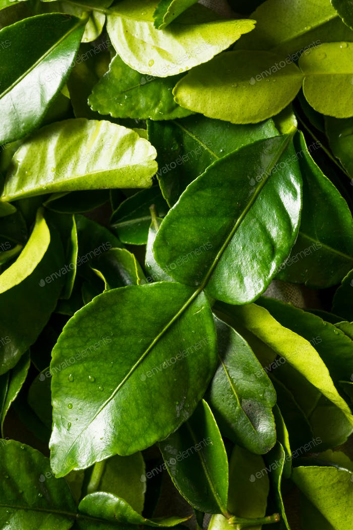 Raw Green Organic Kaffir Lime Leaves
