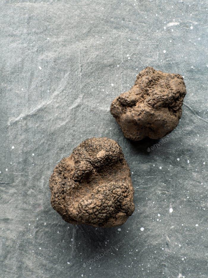 Black truffle mushroom on gray background