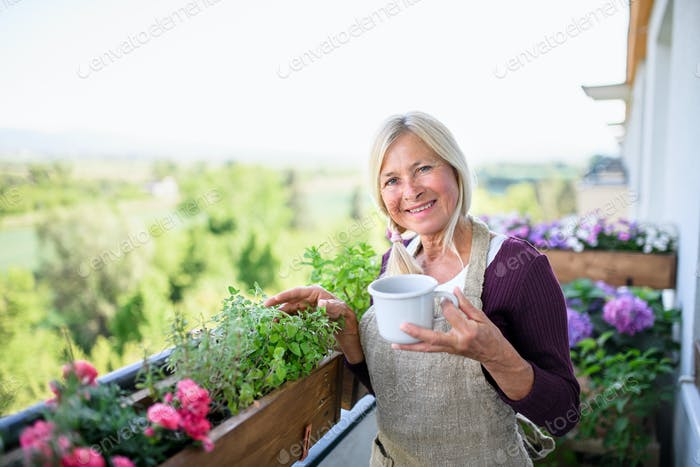 Senior woman with coffee gardening on balcony in summer, looking at camera