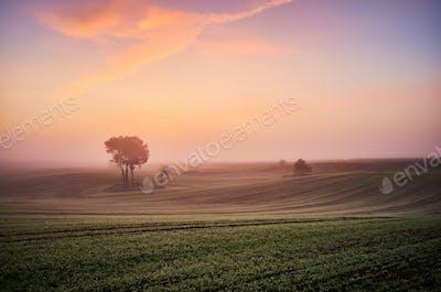 Scenic field