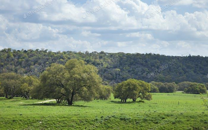 Bäume Felder und Hügel im Texas Hill Land
