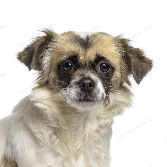 Close-up of mixed-breed dog, cut out