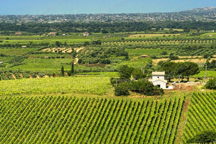 Rural landscape near Velletri at summer