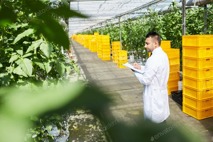 Agricultural engineer examining plants