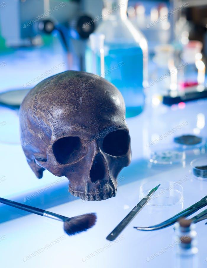 древний человеческий череп