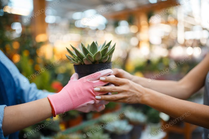 Seller gives plant in a pot to female customer