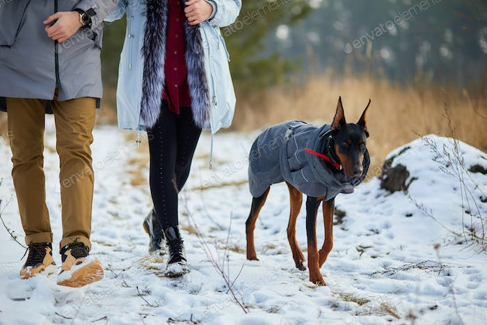 Unrecognizable Young couple with dog doberman outdoor, Walking dogs in nature