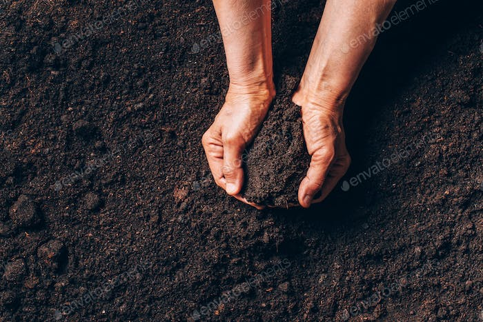 Agriculture, organic gardening, planting or ecology concept. Dirty woman hands holding moist soil