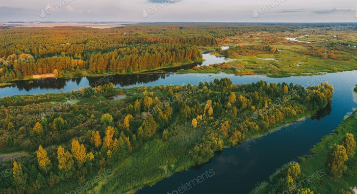Aerial View Green Pine Forest And River Landscape In Sunny Summe