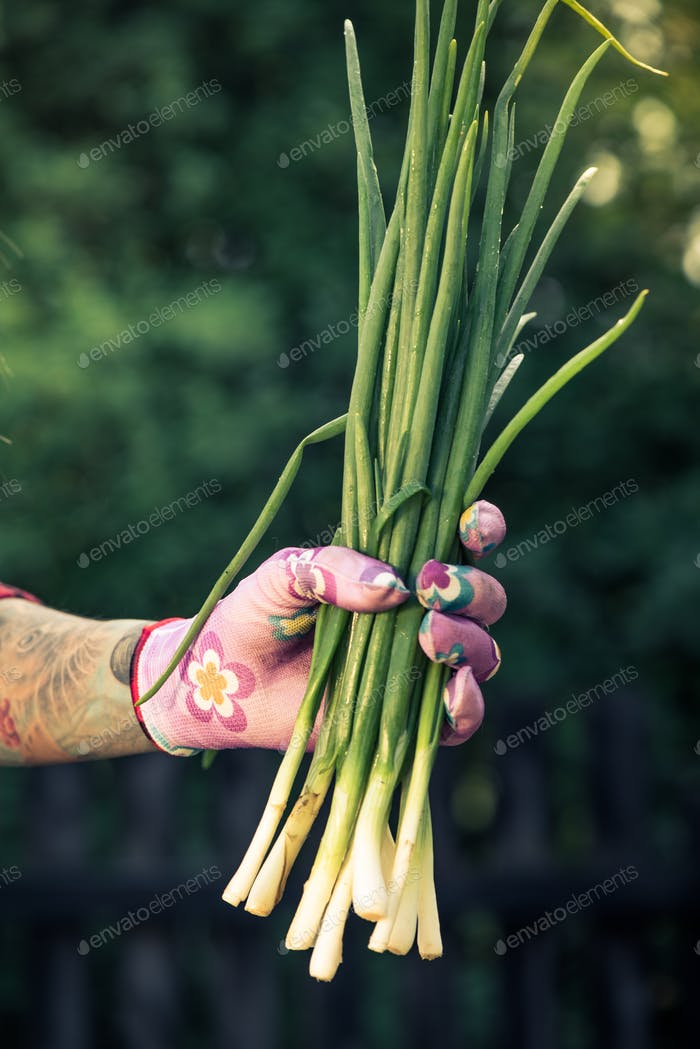 Tattooed hand holding fresh spring onion