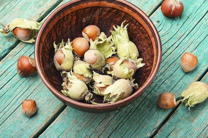 Hazelnuts in the husk