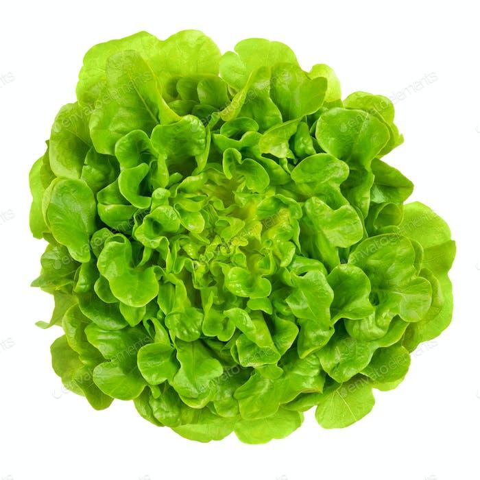 Salanova green oak leaf lettuce from above over white