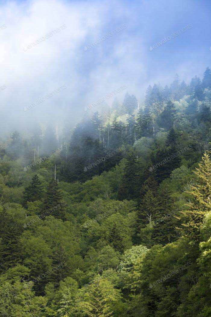 Mist in the Great Smoky Mountains of North Carolina