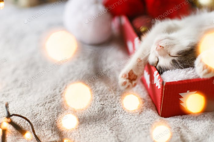 Merry Christmas! Cute kitten sleeping on cozy santa hat with red and gold ornaments in lights