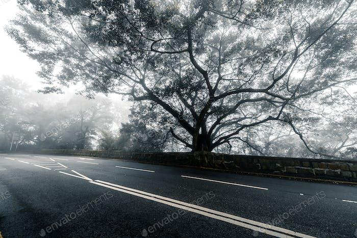 Bäume und Straßen