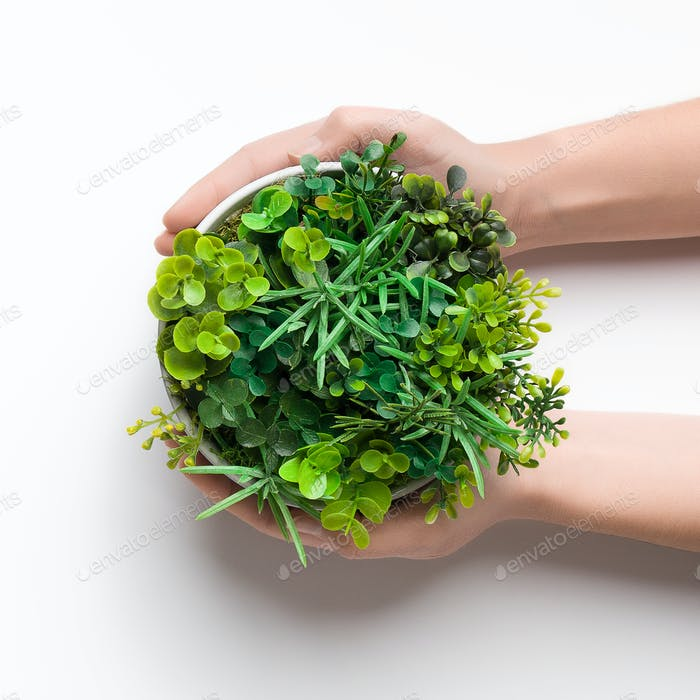 Woman holding pot with mix of plants over white background