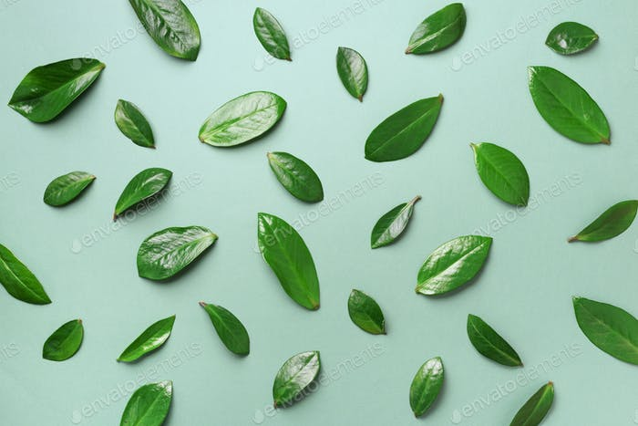 Spring leaves pattern on green background. Creative layout. Top view. Flat lay