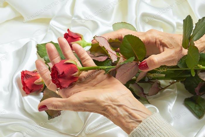 Rote Rose in den Händen einer Seniorin