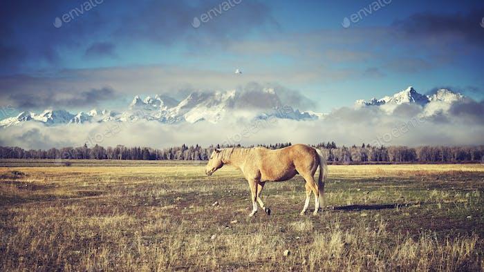 Retro toned grazing horse, Wyoming, USA