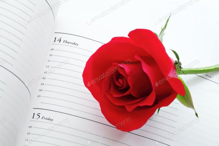 Rote Rose mit Kalender