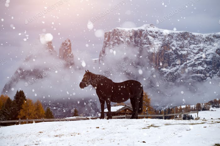 Caballos en nieve en Seiser Alm, Tirol del Sur, Italia