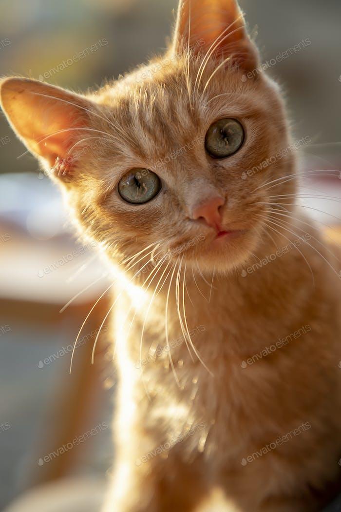 Neugier Katze
