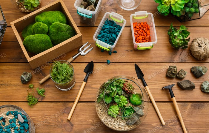 Florarium, plants, moss stones and tools on table