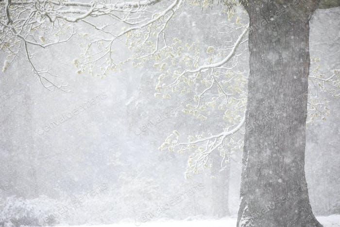 stark schneit, der den späten Frühling mit blühenden Bäumen umgibt