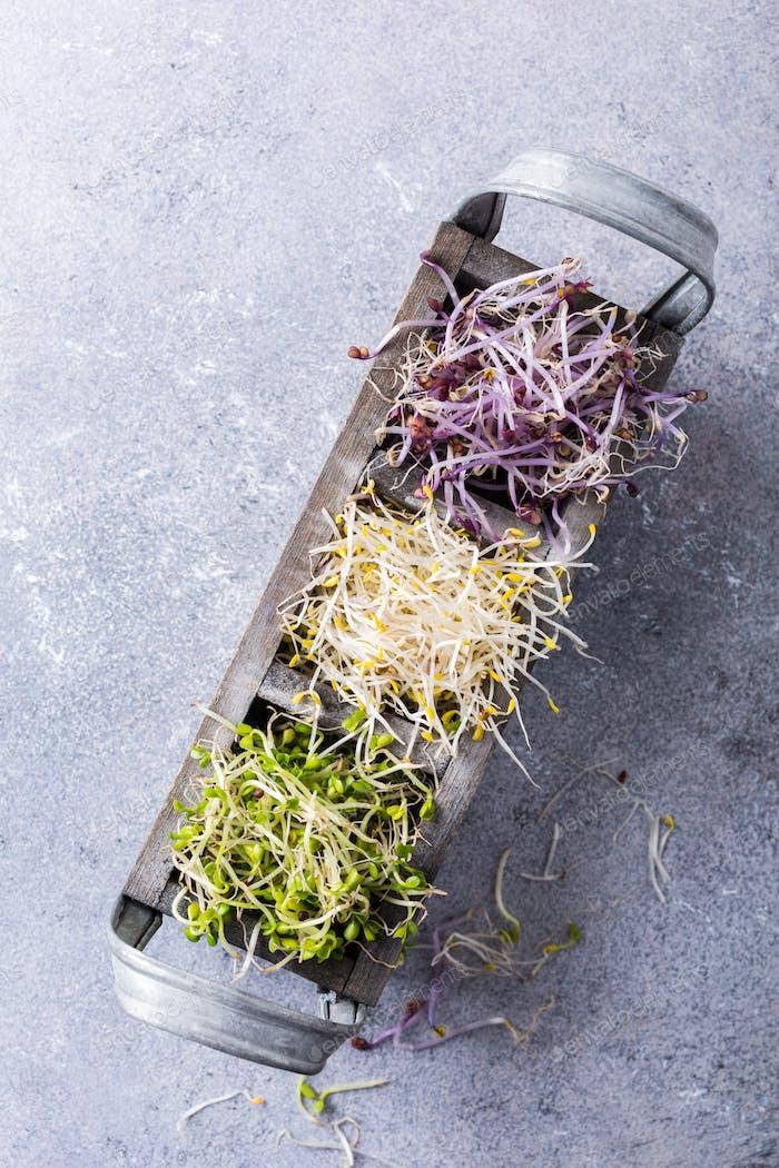 Sortierte Gemüsesprossen