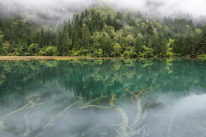Arrow Bamboo lake i in Jiuzhaigou, China, Asia