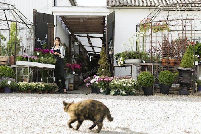 Флорист в цветочном магазине, кошка на переднем плане