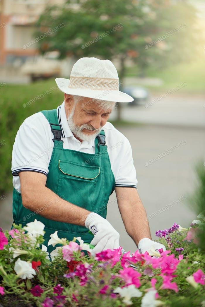Senior Gärtner Beschneiden Blumen im Freien