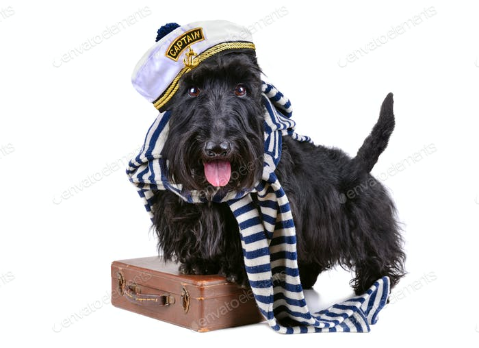 Sailor dog