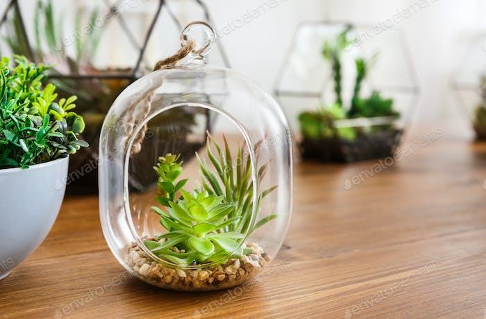 Mini gardens in florariums. Green interior decor concept
