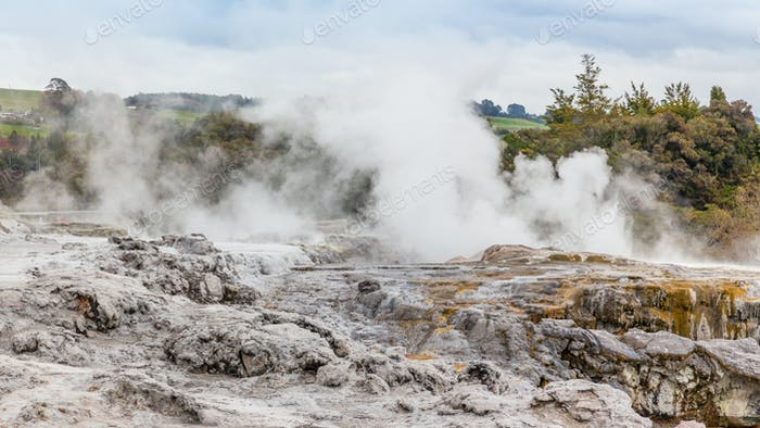Geothermal Activity at Whakarewarewa