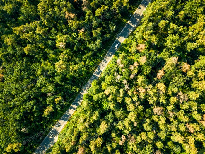 The road with a passing car through the foliage of the forest on a sunny day. Aerial view of the