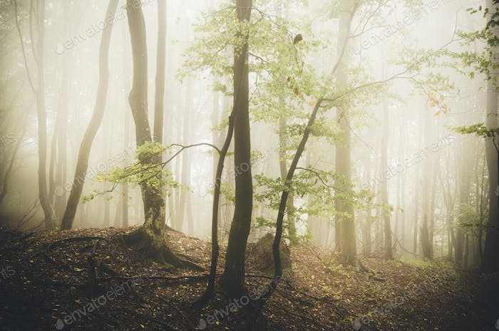 Surreal autumn forest with fog