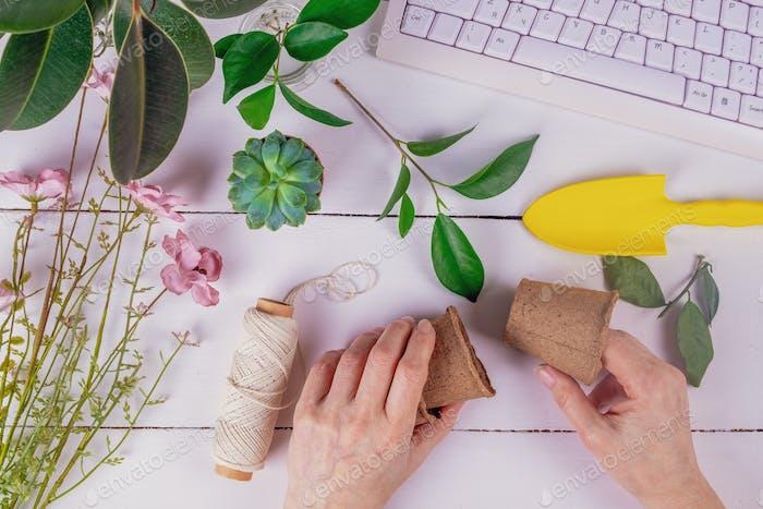 Weibliche Hände halten Torftöpfe zum Anpflanzen von Ficus-Stecklingen. Hausgärtnerei, Hobby, Frühlingskonzept