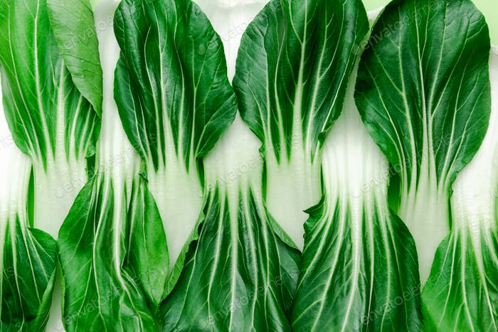 Natural Green Pattern. Close Up Green Vegetable Bok Choy Leaves Background