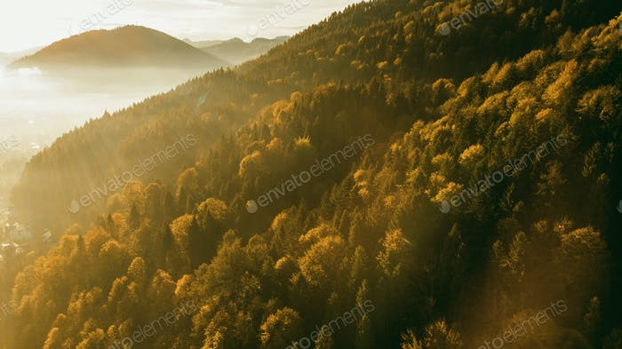 Sunrise Baclight Over Autumnal Forest. Vibrant Foliage and Sun R