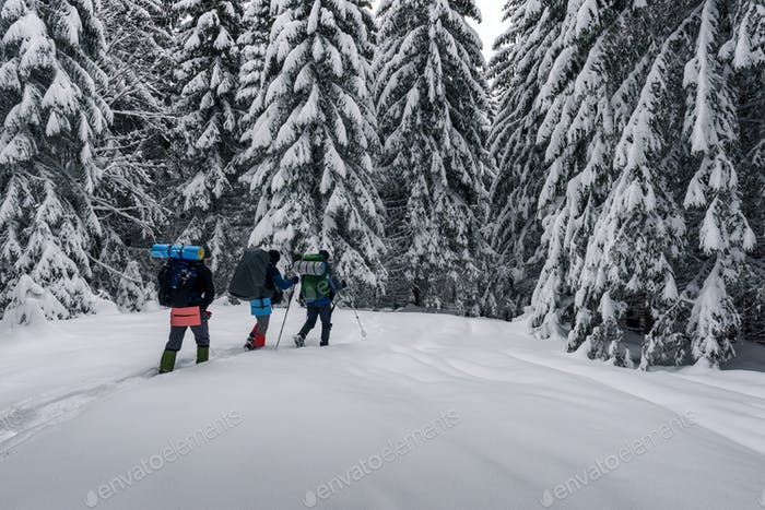 Three tourists with a backpacks in the snowy forest
